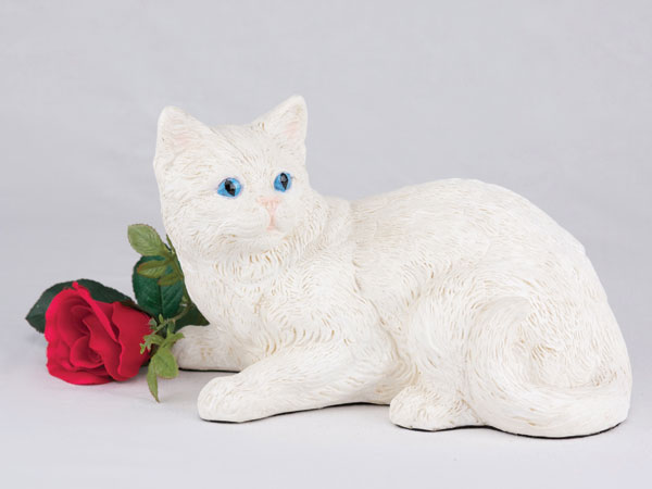 Shorthair Cat - All White