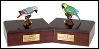 Birds Category